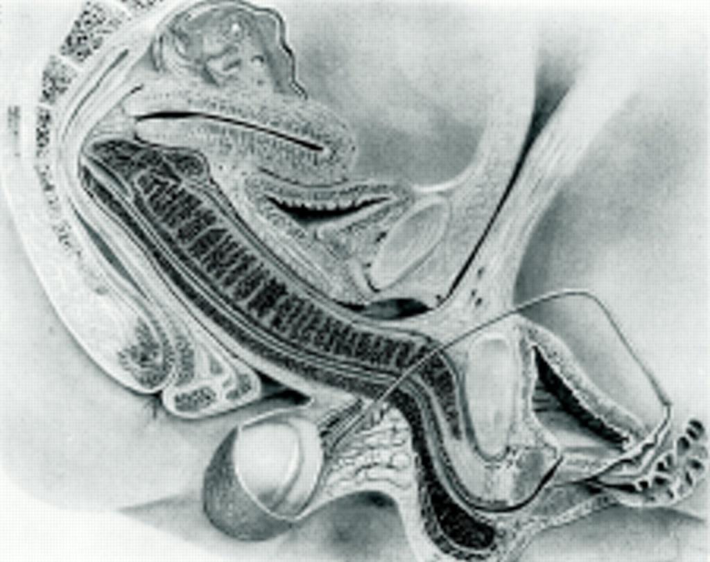 analniy-seks-vid-iznutri